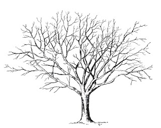 Strangers & Pilgrims on Earth: Trees ~ A {Free} Unit Study.