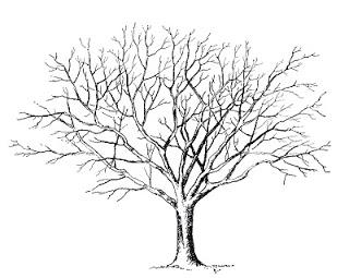Strangers & Pilgrims on Earth: Trees ~ A {Free} Unit Study.