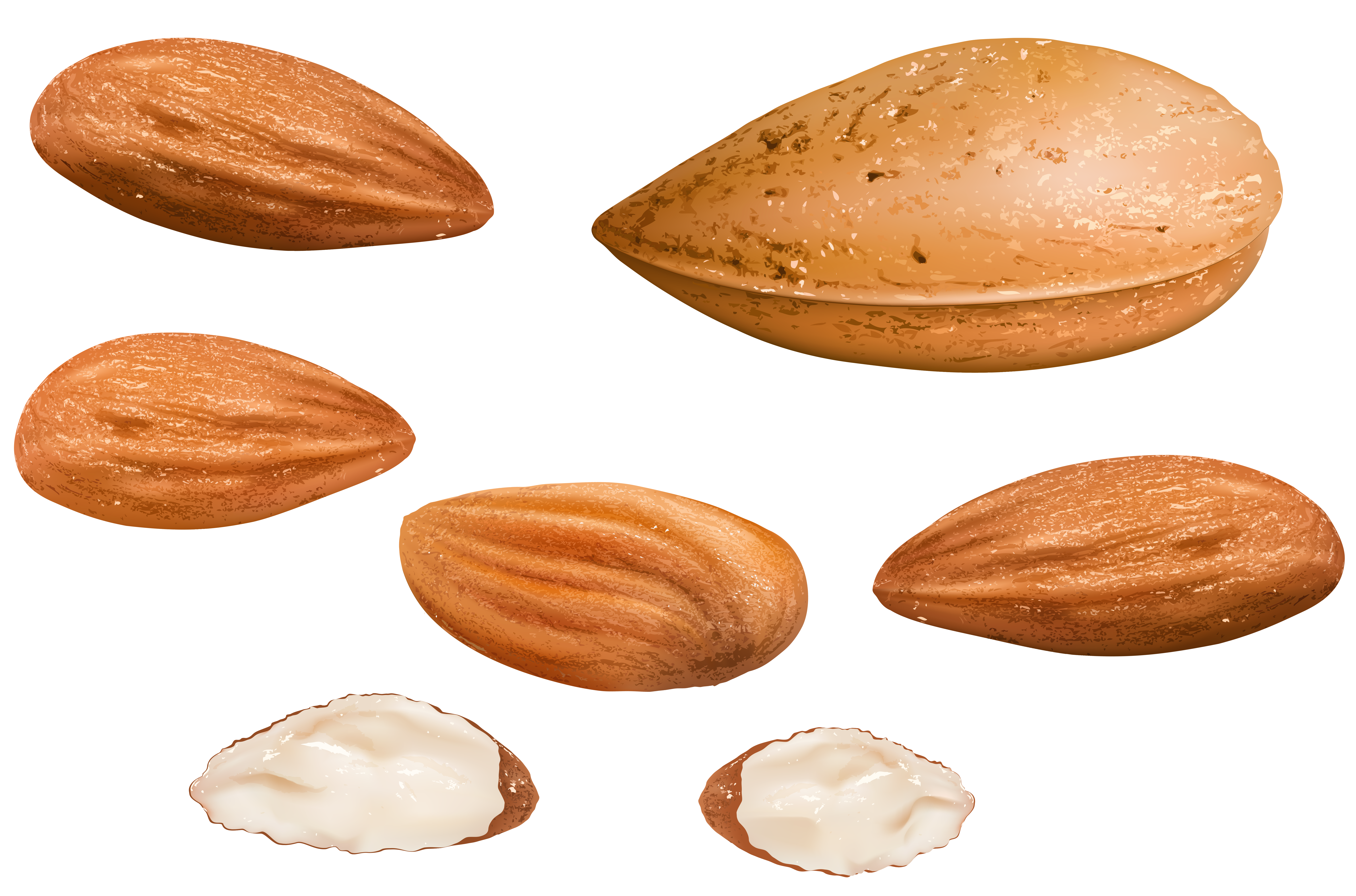 Almonds PNG Clipart Image.
