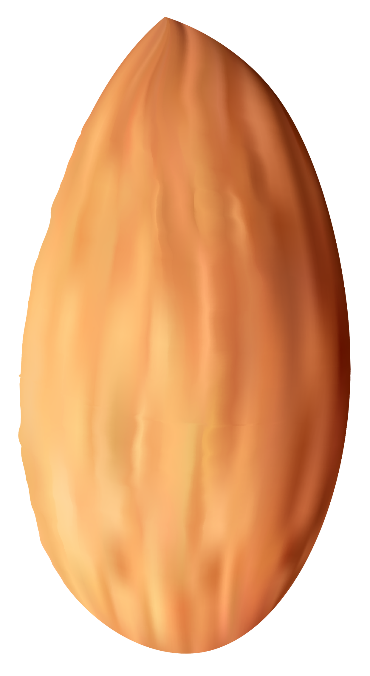 Almond Nut PNG Clipart.