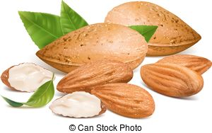 Almonds Clipart and Stock Illustrations. 1,813 Almonds vector EPS.