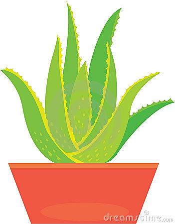 Clipart aloe vera plant.
