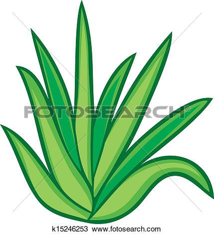 Clipart of aloe vera plant k15246253.