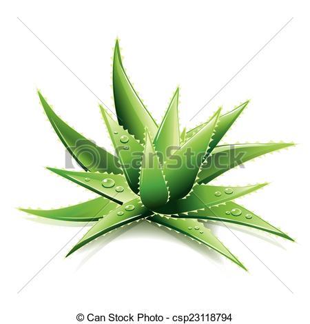 Aloe Illustrations and Clipart. 825 Aloe royalty free.