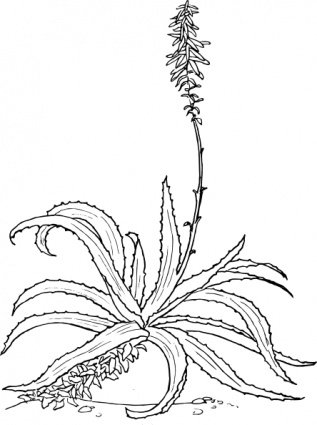 Aloe Vera Plant Clip Art, Vector Aloe Vera Plant.