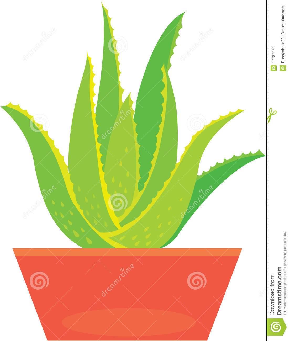Aloe vera plant clipart 3 » Clipart Portal.