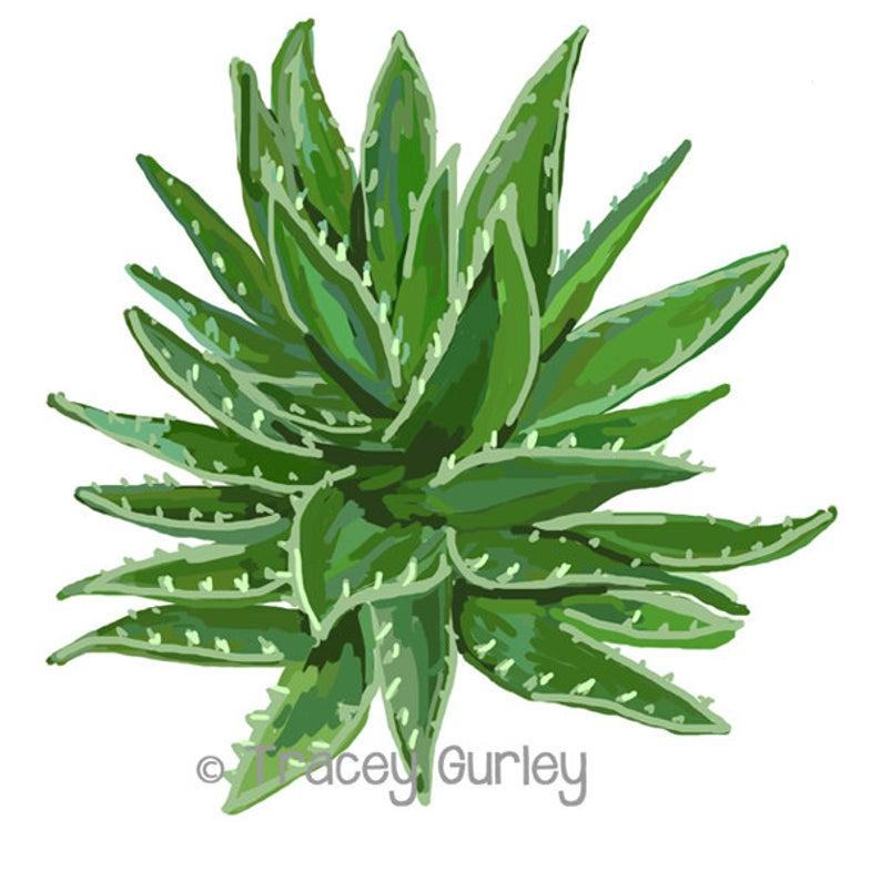 Aloe Vera Plant Art.