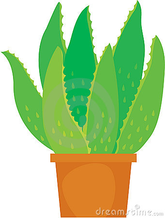 Gallery For > Aloe Vera Plant Clipart.