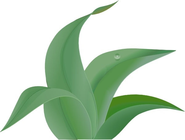 Aloe Vera Free vector in Adobe Illustrator ai ( .AI.