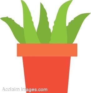 Clip Art of a Potted Aloe Vera Plant.