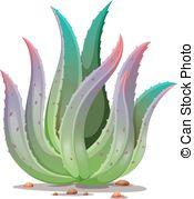 Aloe vera plant Clip Art Vector and Illustration. 389 Aloe vera.
