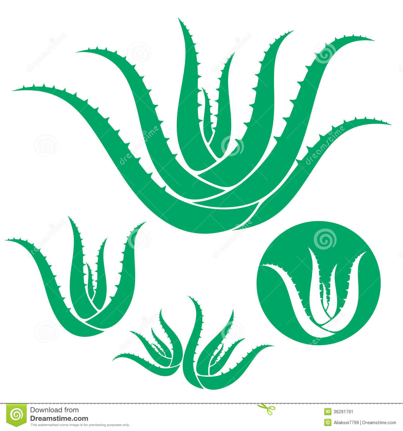 Aloe Vera Stock Illustrations.