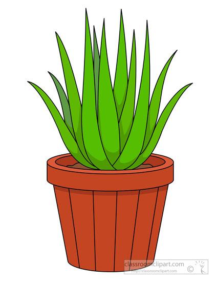 Plants : aloe.