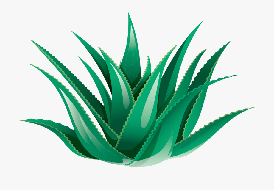 Clipart Black And White Library Aloe Vera Icon Transprent.