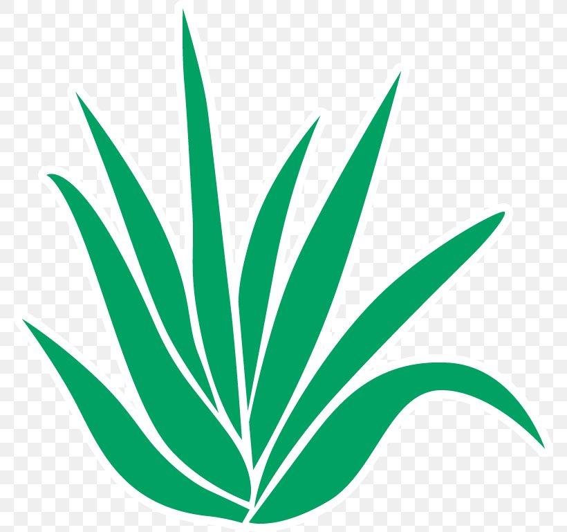 Aloe Vera Pain Gel Menthol Clip Art, PNG, 780x769px, Aloe.