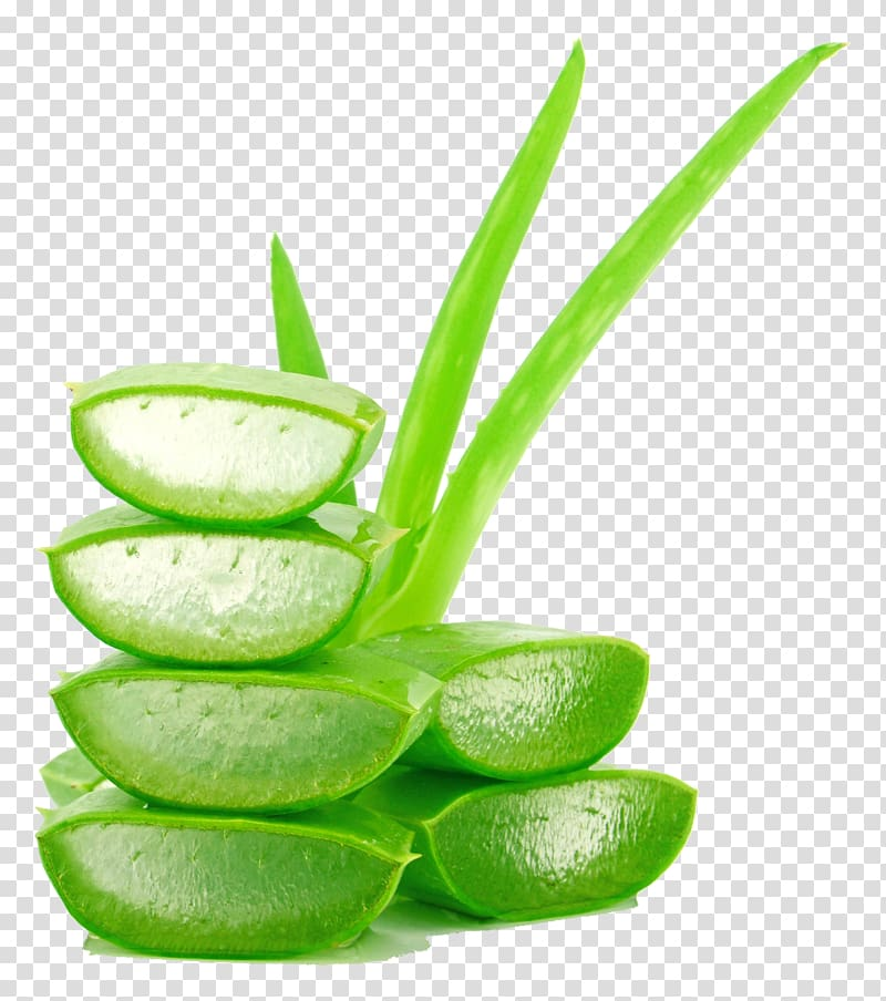 Green aloe vera plant , Aloe vera Juice Lotion Gel Cream, Aloe.