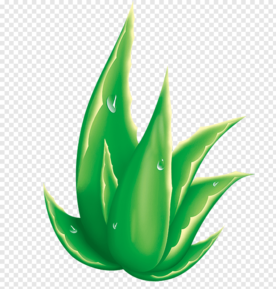 Aloe Vera illustration, Aloe vera Raster graphics.
