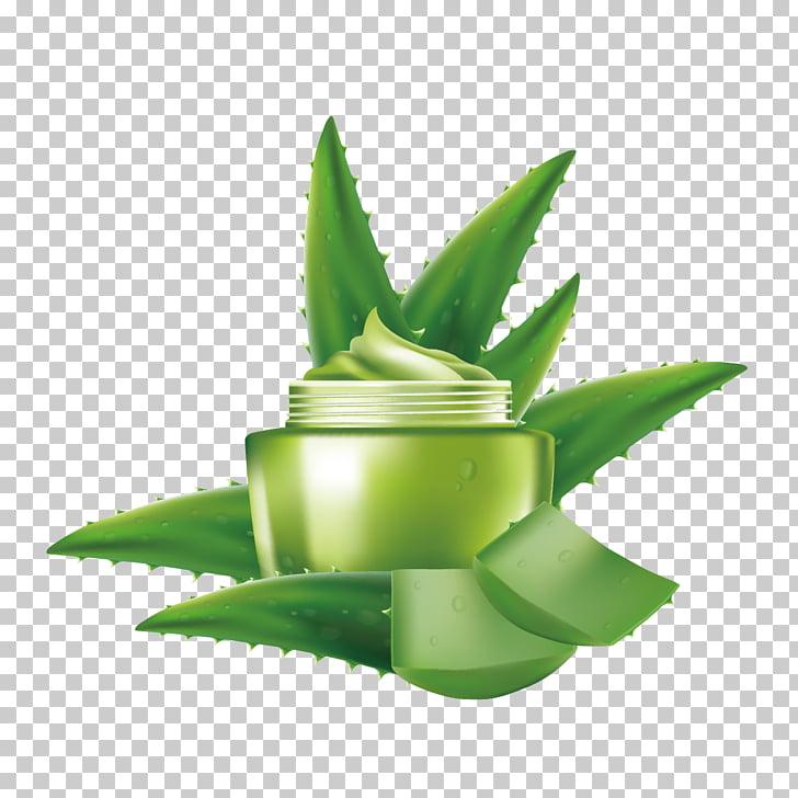 Aloe vera Cosmetics Euclidean , Aloe vera essence PNG.