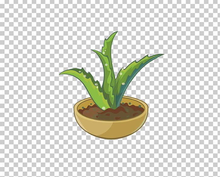 Aloe Cartoon PNG, Clipart, Aloe, Aloe Vector, Aloe Vera.