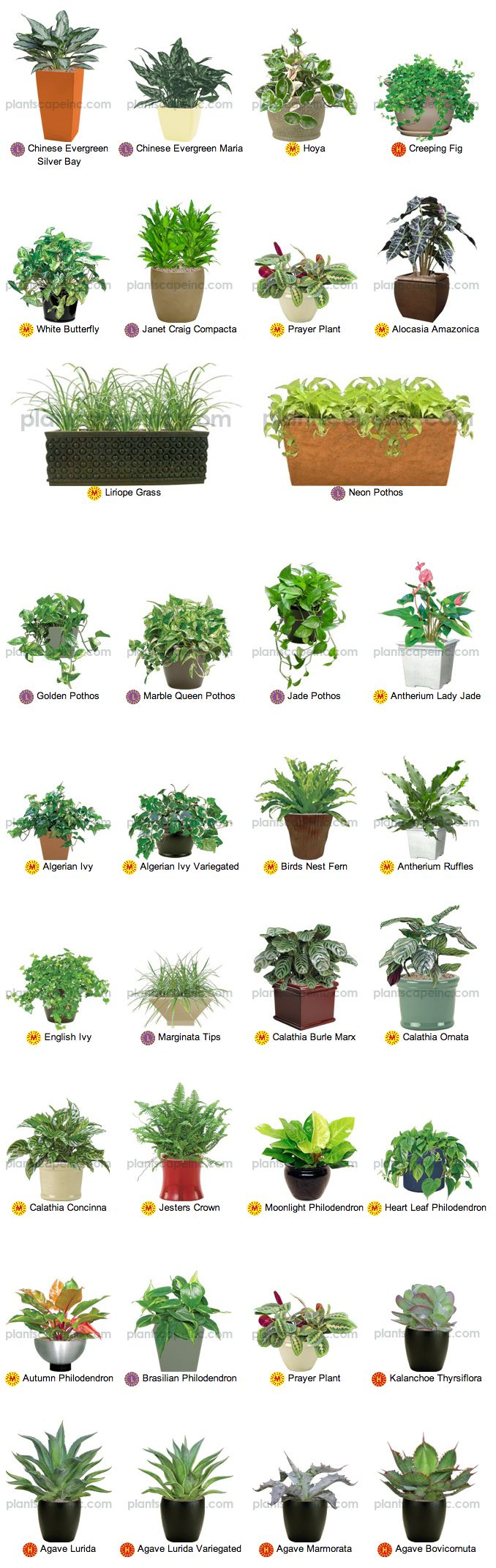 1000+ ideas about Indoor Plant Lights on Pinterest.