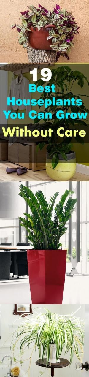 1000+ images about Houseplants on Pinterest.
