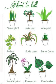Back to, Africa and Plants on Pinterest.