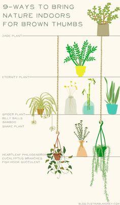 sophora plant (trendenser.se).