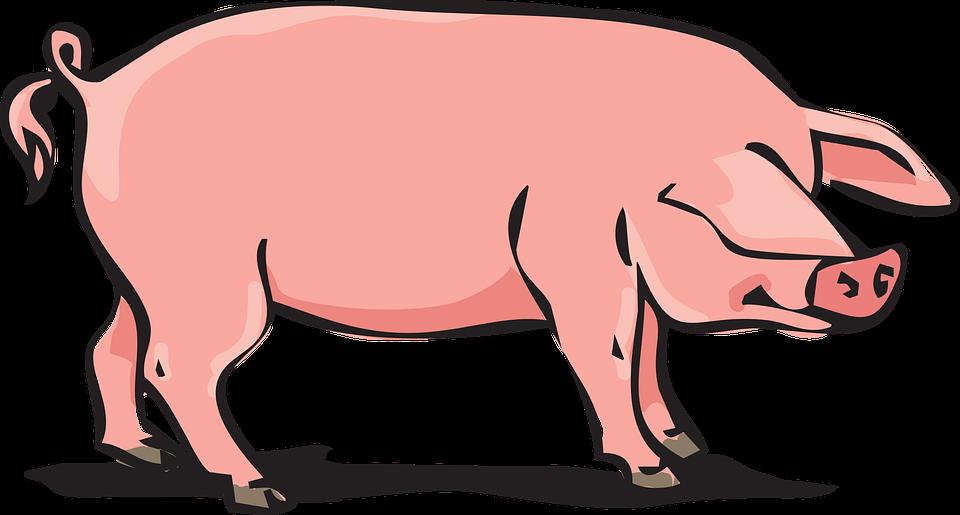 Free vector graphic: Pork, Animal Farm, Pig.