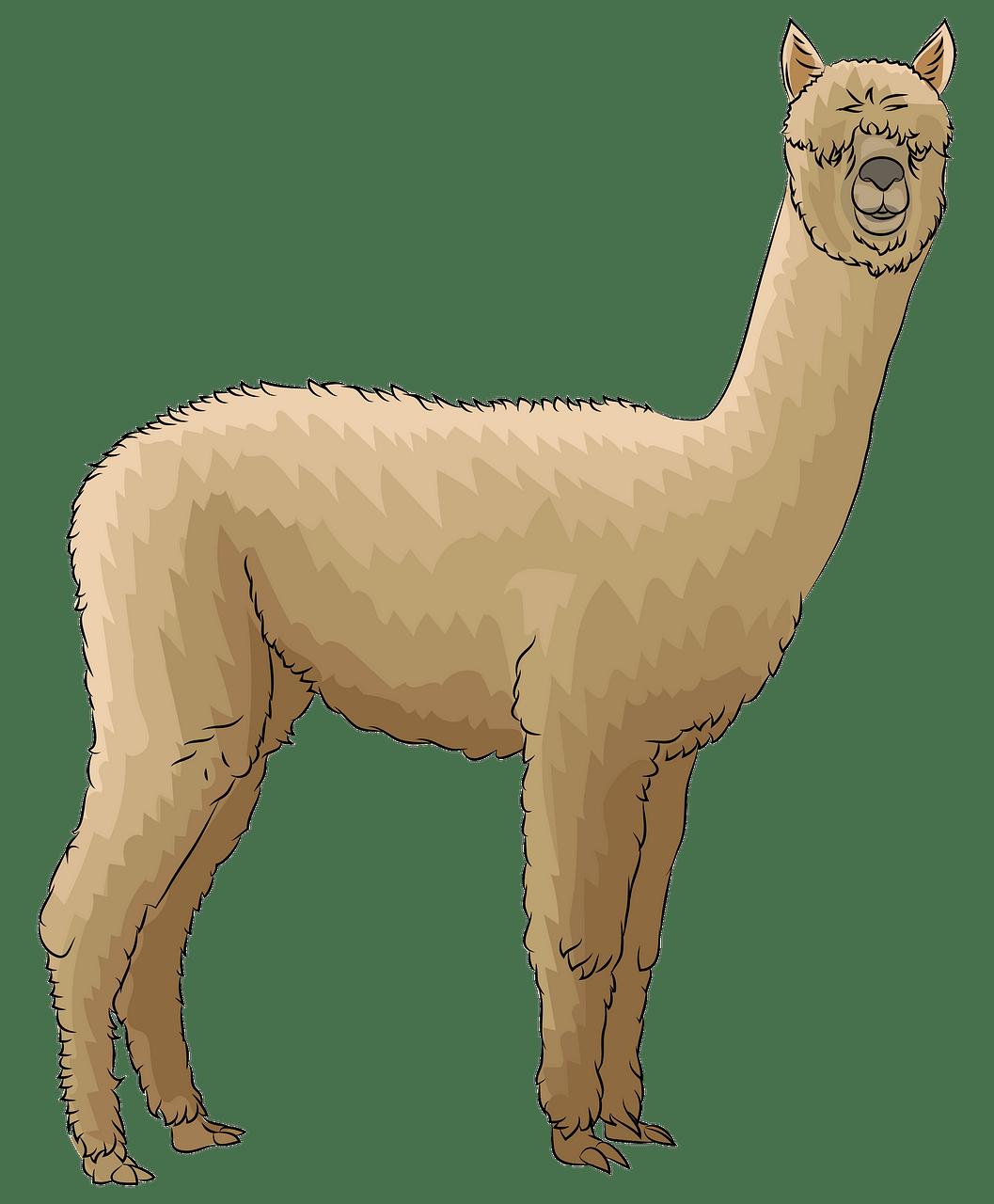 Alpaca clipart. Free download..