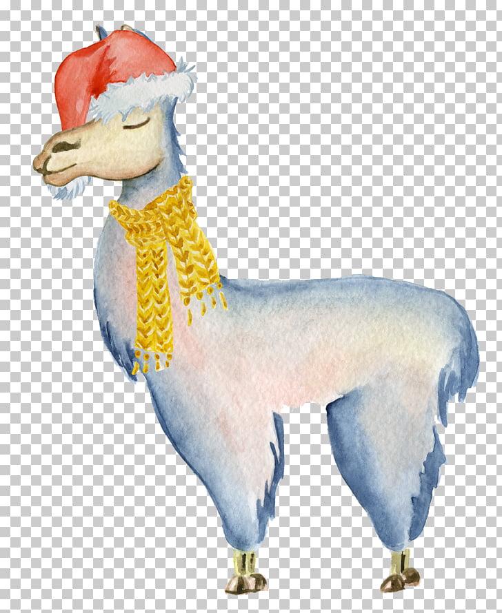 Llama Alpaca Drawing, alpaca PNG clipart.