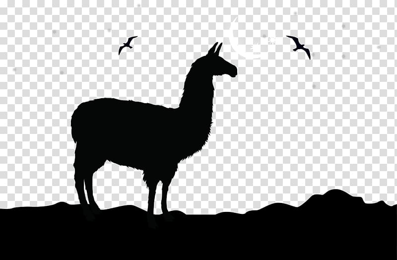 Animal illustration, Alpaca Llama Logo , camel silhouette.