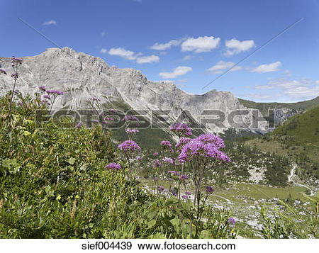 Stock Photograph of Austria, Carinthia, Carnic Alps, Wolayer Alm.