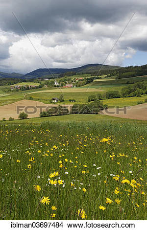 """Stock Photo of """"Cultivated landscape with a flower meadow."""