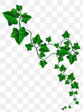 Common Ivy Vine Clip Art, PNG, 564x598px, Common Ivy, Alpha.