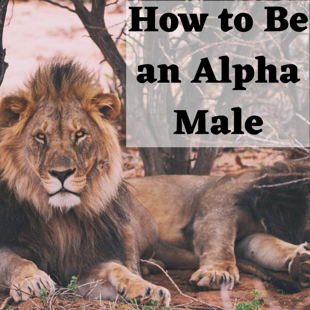 How to Be an Alpha Male: Typical Characteristics, Personality.