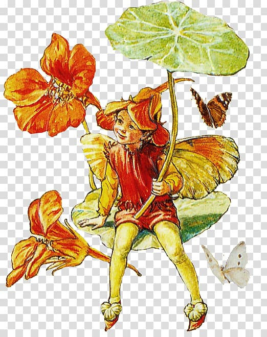 A Flower Fairy Alphabet The book of the flower fairies.