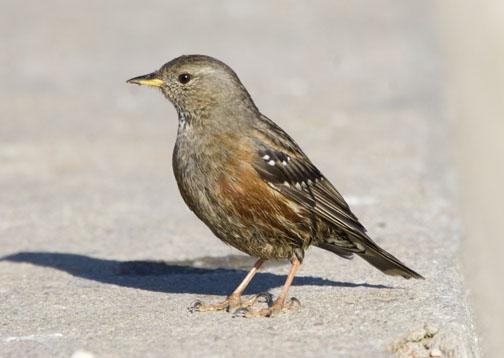 Birding report January 2007 Algarve Portugal..