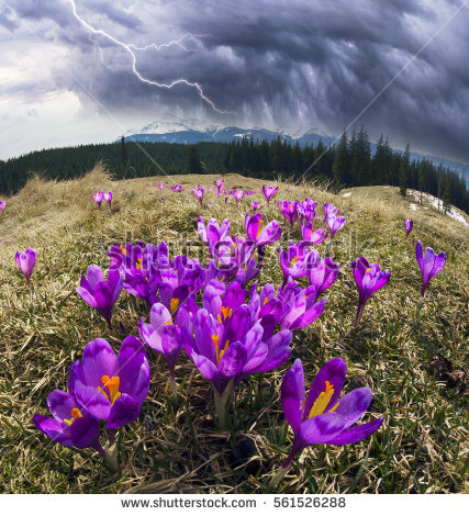Spring Snow Melt Carpathian Valleys Grow Stock Photo 176558870.