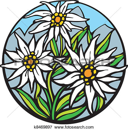 Stock Photo of Edelweiss Alpine Flower k5776093.