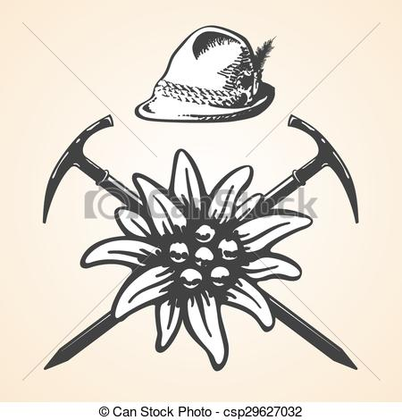 Edelweiss Illustrations and Stock Art. 148 Edelweiss illustration.