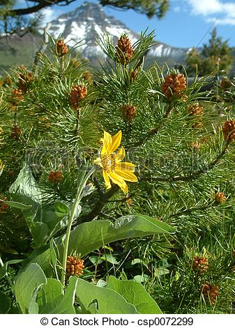 Stock Photographs of alpine flora.