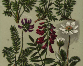 Antique Handcolored Print loaded with Flowers by Printvilla4you.