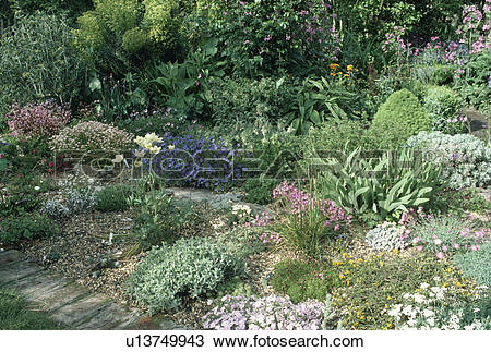 Stock Photo of Pink and blue flowering alpine plants in small.