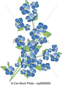 Forget Me Not Flower Drawings.