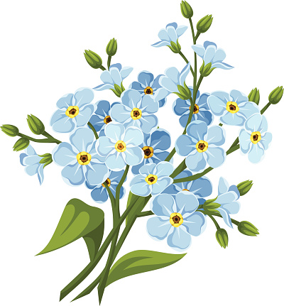 1000+ images about ♡♡FORGET ME NOT..♡♡ on Pinterest.