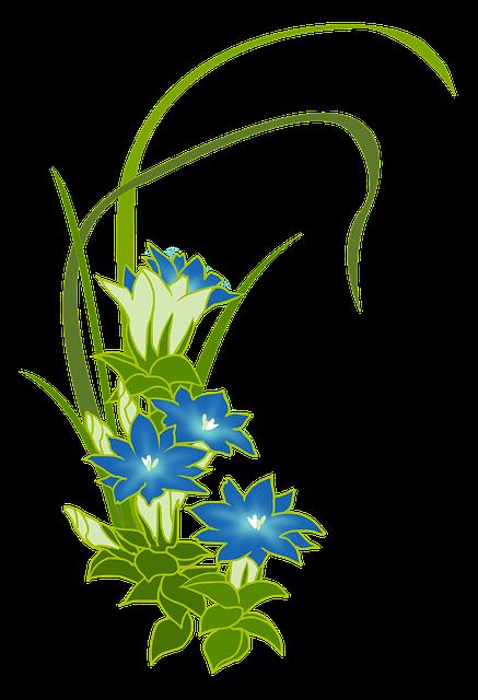 Free photo Alpine Flowers Blue Gentian True Alpine Gentian.