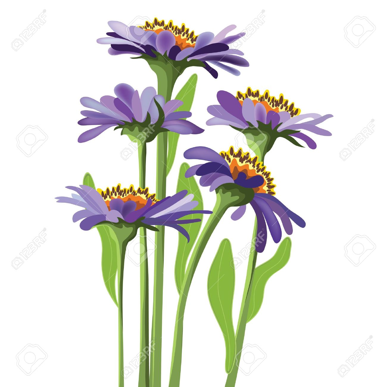 Floral Design, Purple Aster Royalty Free Cliparts, Vectors, And.