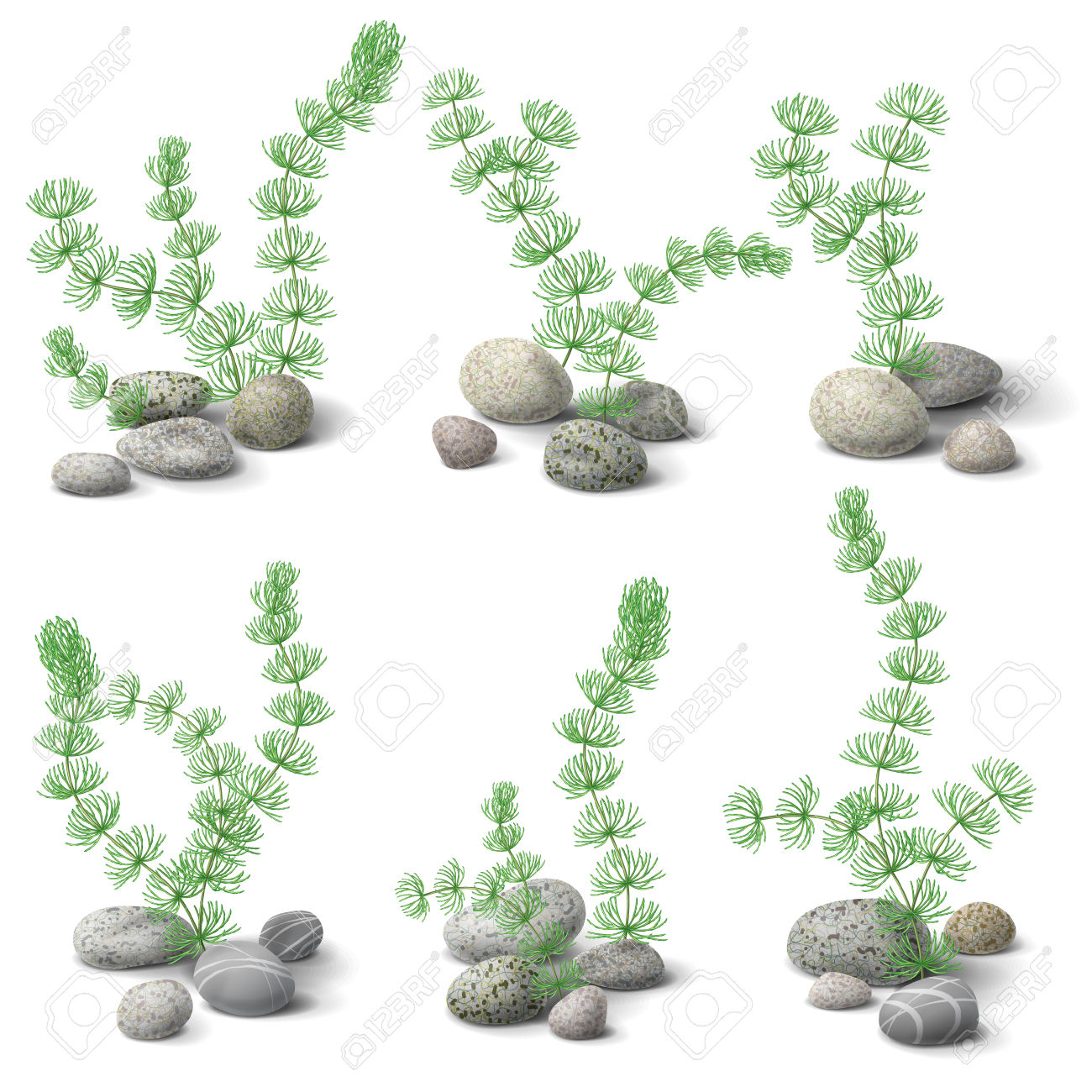 Green Hornwort Algae And Pebbles Set Isolated On White. Royalty.