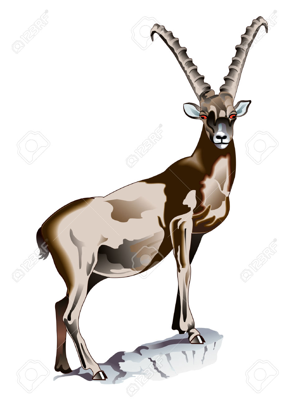 Alpine Ibex Royalty Free Cliparts, Vectors, And Stock Illustration.