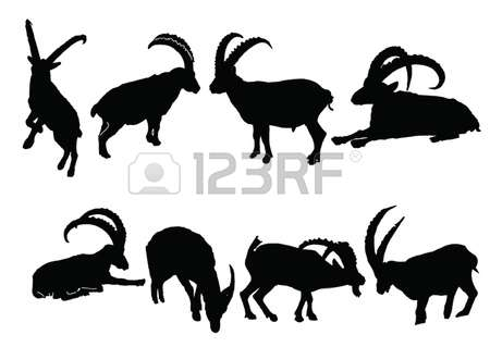 238 Alpine Ibex Stock Vector Illustration And Royalty Free Alpine.